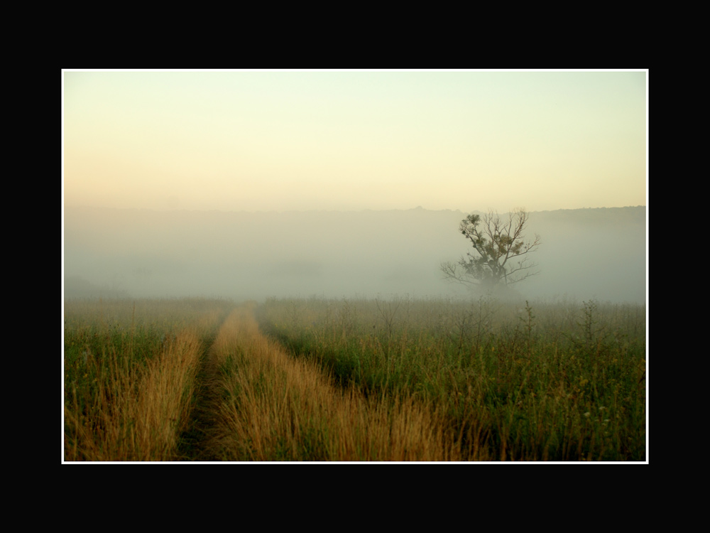 ... в тумане