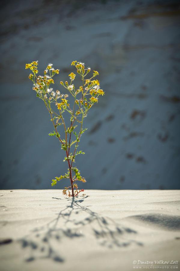 Цветочек в пустыне